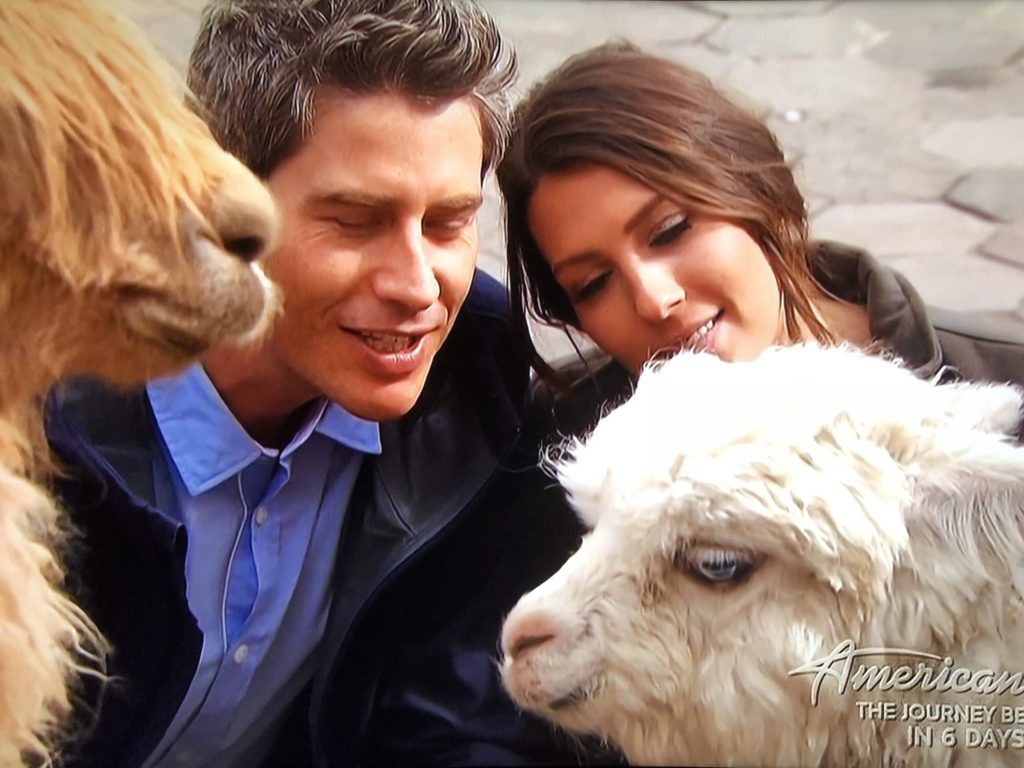 becca and arie with alpacas